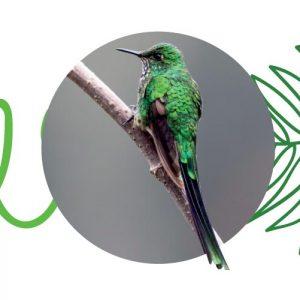 Cometa coliverde