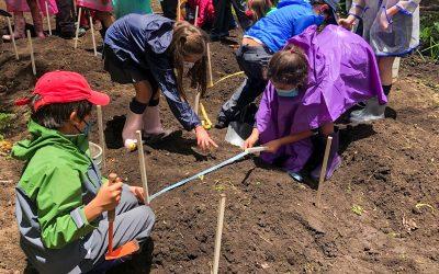 Gardening project in Zasqua